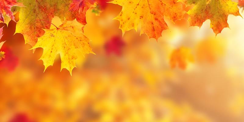 Mach Dir den Herbst helle.