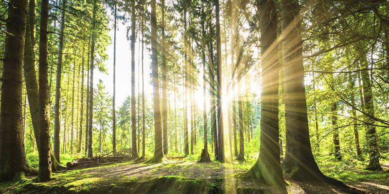 Was ist eigentlich gesunde Beleuchtung?